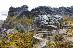 Rock near ocean with plant life Stock Photos