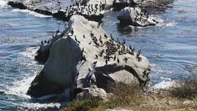 Rock in the ocean and flock of birds. Colony of brown pelicans, cormorants and seagulls. Rock in the ocean and flock of birds.Colony of brown pelicans stock video footage