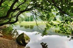 Rock och överhäng Tree av Lake royaltyfria foton