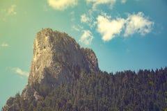 Rock och skog Arkivbilder
