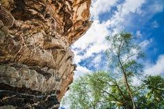 Rock och Trees arkivfoto