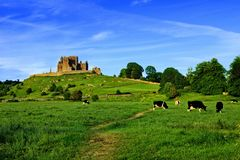 Free Rock Of Cashel Above Green Fields With Cows, Tipperary, Ireland Royalty Free Stock Photo - 141698985