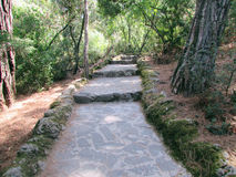 Rock path in the woods Royalty Free Stock Photo