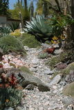 Rock Pathway Through the Succulents Stock Image