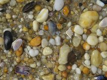 Rock Pebbles And Seashells On The Beach. As the tide rolled in the water went over the rock pebbles and seashells on the beach Royalty Free Stock Photography