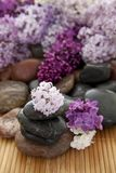 Rock pile with flowers Stock Photography
