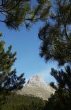 Rock and pines Stock Photos
