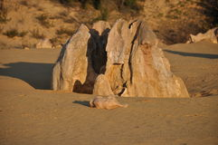 Rock in pinnacle desert Royalty Free Stock Images