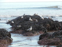 Rock with plant and sea gulls Royalty Free Stock Photography