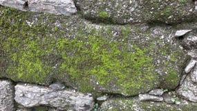 Rock, Plant, Vegetation, Moss royalty free stock photography