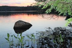 Rock and plants in lake at sunset Royalty Free Stock Images