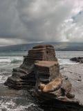 Rock Platform and Sea Lion Stock Photo