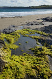 Rock pool on a Cornish beach. Royalty Free Stock Images