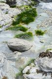 Rock pool. Trevaunance cove,St Agnes Stock Photos