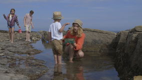 Rock Pooling stock video