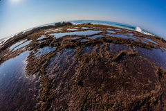 Rock Pools Seaweed Environment Ocean Stock Photo