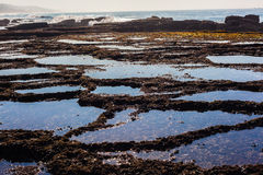 Rock Shelf Pools Seaweed Ocean Royalty Free Stock Photography