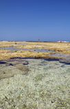 Rock pools on beach in summer Stock Photography