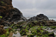 Rock pools and seaweed Royalty Free Stock Images