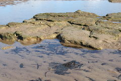 Rock pools with seaweed on beach Royalty Free Stock Photos