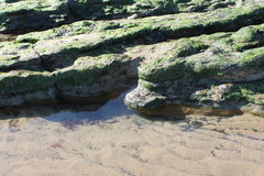 Rock pools with seaweed on beach. In Scarborough Royalty Free Stock Photography