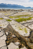 Rock pools with seaweed at Kaikoura beach Royalty Free Stock Photography