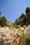 Rock with purple plant in the cleft of Imbros Royalty Free Stock Image