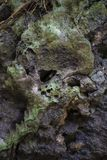 Rock in rainforest looking like skull stock images