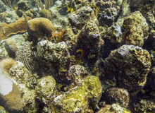 Rock reef Royalty Free Stock Image