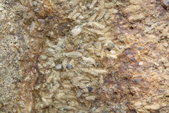 Rock Rice Fossil Thailand Royalty Free Stock Photos