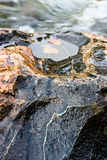 Rock in the river Royalty Free Stock Photography