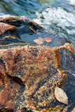 Rock in the river Royalty Free Stock Photos