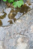 Rock in river water background Royalty Free Stock Images