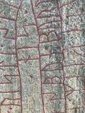 Rock runestone detail, Norrkoping, Ostergotland, Sweden. Carved and written by  Vikings the Rock Runestone or Runsten, detail view Stock Photos