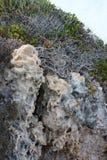 Rock. Of sandstone Stock Photo