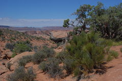 Rock Scrub and Sky 2. Red sandstone rocks jutting into clear sky in Utah. Desert scrub and pinyon pine adds greenery Stock Images