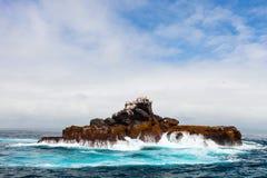 Rock with sea birds Stock Photos