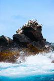 Rock with sea birds Stock Photography