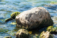 Rock sea dried algae Royalty Free Stock Images