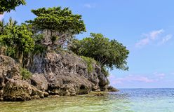 Rock and sea. Philippines: Green trees on a rock royalty free stock images