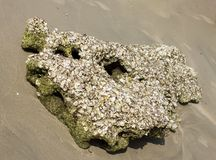 Rock sea on sand Royalty Free Stock Photography