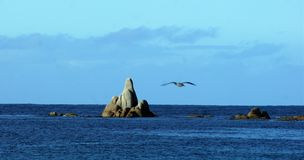 Rock, Sea and Sky in Tasmania. Rocks, sea and sky in Tasmania, with seagull. A wonderful place to holiday Royalty Free Stock Photos
