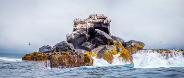 Rock in the sea with storm and animal on it , Galapagos Stock Images