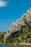 The rock. Seagulls on the rock in Croatia Stock Images
