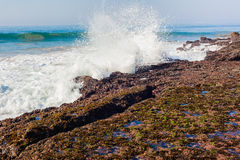 Rock Shelf Barnicles Seaweed Waves Royalty Free Stock Image