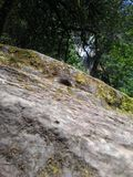 A rock. By the Silver Falls Royalty Free Stock Photo