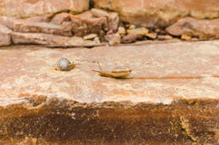 Rock and snails Stock Images