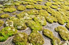 Rock som räknas i grön moss royaltyfria foton