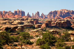 Rock spires. In needles area of Canyonlands National Park USA Stock Images