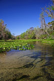 Rock Springs Run. Scenic Rock Springs Run near Orlando, Florida Royalty Free Stock Photo